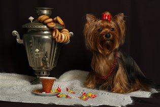 Собачье гостеприимство!