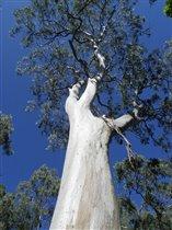 У древесных корней