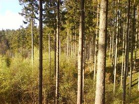 Лес и солнце