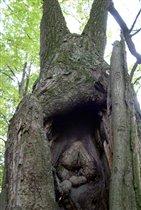 древо родов
