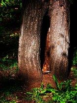 Здесь живут лесные гномы;)