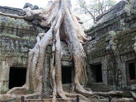 Дерево поглотило здание древнего храма