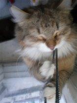 кошка Васелиса