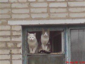 Кошачья любовь...