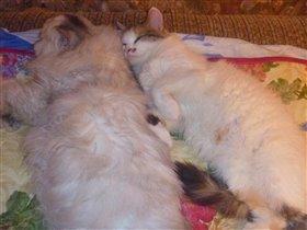 Мы так спим