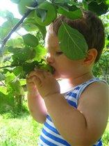 Фотоконкурс Завтрак на траве Люблю яблочки !