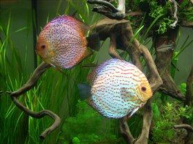 Красивые рыбешки