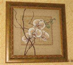 Dimensions 35176 'Восточные орхидеи'