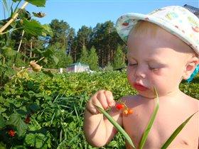 ягода-смородина