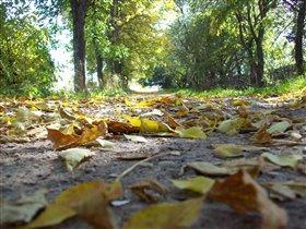 Дорога из жёлтых листьев
