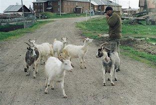 Солвецкие козы