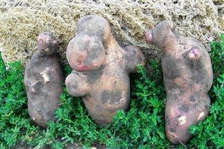 Три картофелины-богатыря