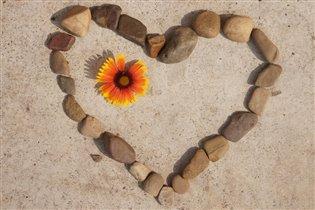 сердце каменное...