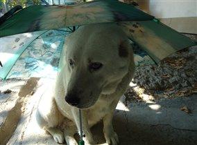 дама под зонтом
