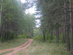 деревенский лес