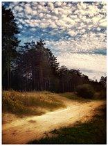 По лесной дорожке