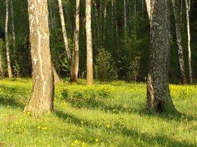 солнечная полянка в лесу