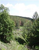 Лес поволжья