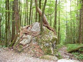 Лес на юге Германии