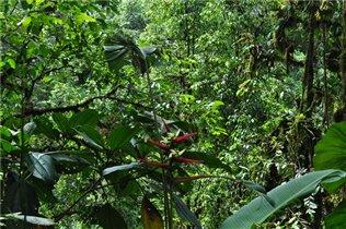 Тропический дождевой лес (сельва)