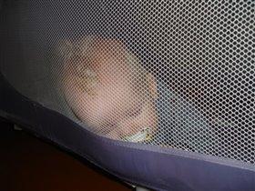 Случайно уснул в манеже