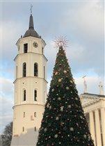 Ель в Вильнюсе
