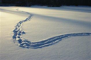 Снежная зарисовка