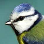 Любители птиц