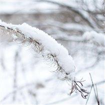 Нежная зима