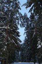 Мороз и солнце день чудесный в лесу!