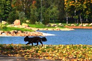 Осень скверы украшает разноцветною листвой....