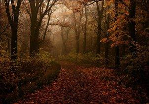 Блиц: осень