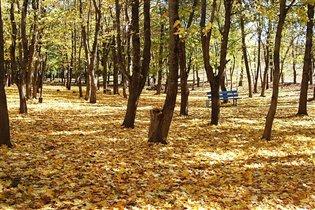 Осенний парк. 'Места для поцелуев'))