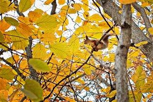Осень, как рыжая белка...