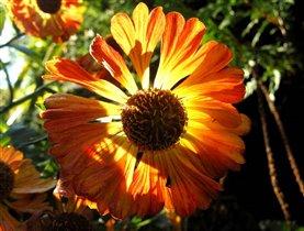 Осенний цветок утром