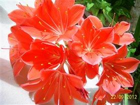 Блиц цветы