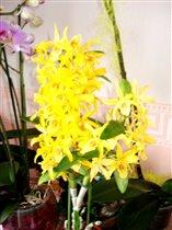 Мои цветочки)
