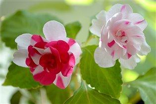На окошкеи два цветочка..........