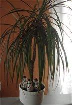 снеговички под пальмой отдыхают