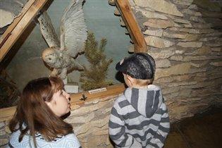 В Музее леса - чучело полярной совы.