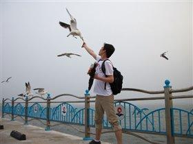 чайки, чайки.....