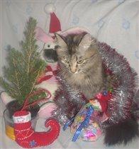 И даже кошка в предвкушении праздника