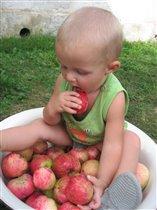 Одно яблочко беру, на другое смотрю...