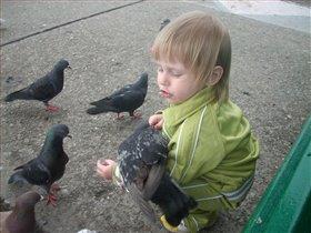 Беседы с птицами