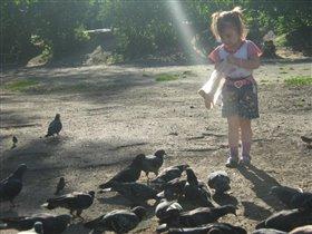 подкормка голубей