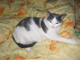 Кошка Юля