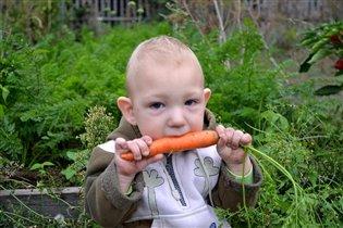 Хороша морковка с грядки...