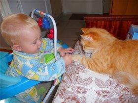 Сынок мучает кошку