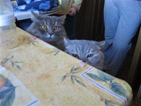Кошки (вид спереди)