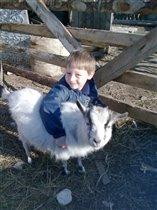 козы тоже умеют дружить